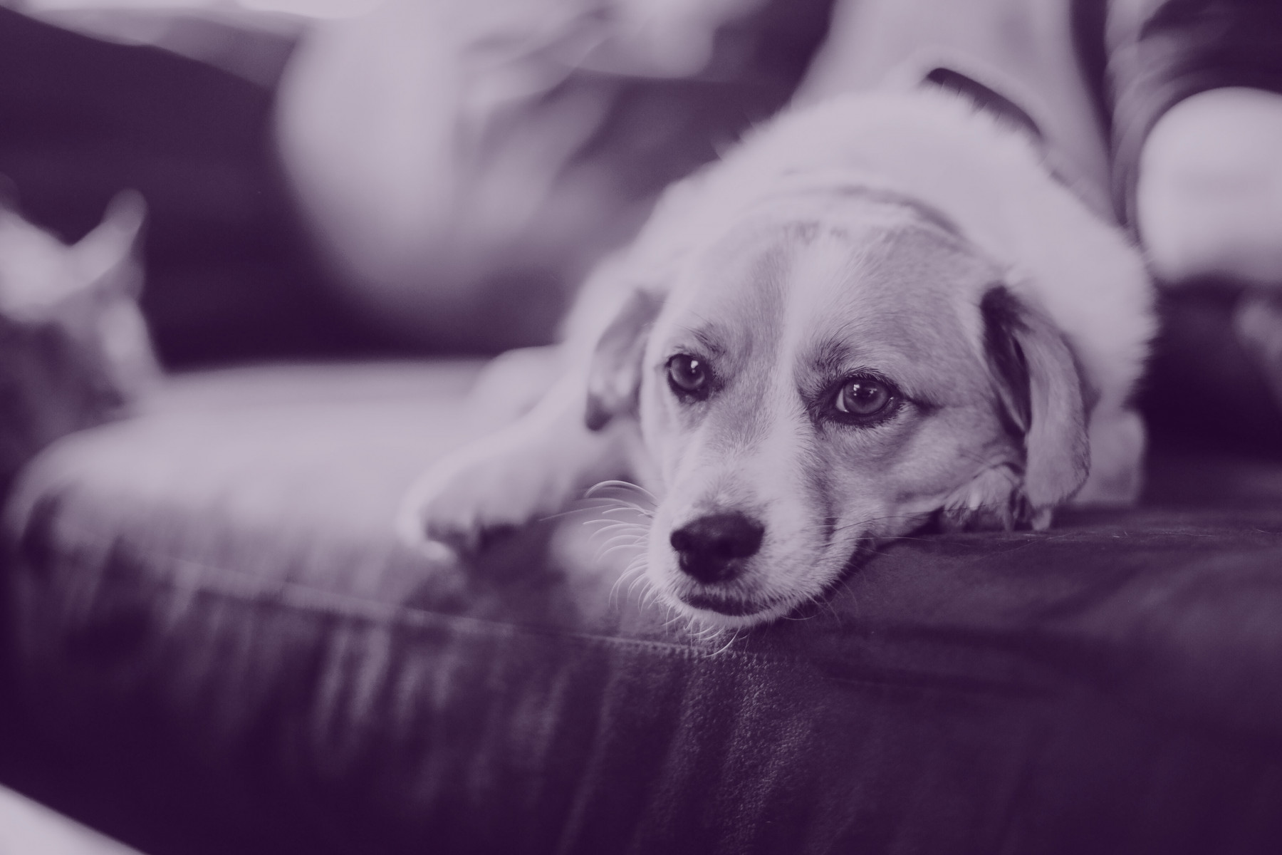 Pet peeves: should landlords have a 'no pets' rule?